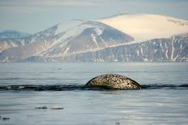 behind the plan to protect the serengeti of the arctic u2014 oceans deeply