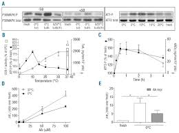 arachidonic acid depletion extends survival of cold stored
