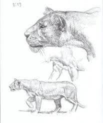 drawn cat big cat pencil and in color drawn cat big cat