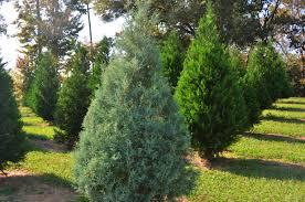 oh christmas tree oh christmas tree union power cooperative