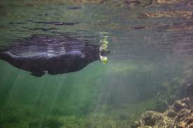 Oregon snorkeling images Blueback 39 s chapter leading the way in angler science wild jpg