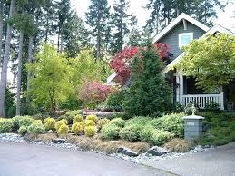 evergreen trees for domestic gardens ornamental evergreen trees