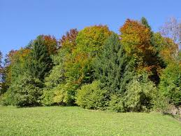 free images tree meadow leaf flower evergreen autumn