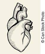 stock illustration of anatomical heart and lung engraving an