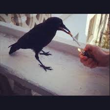 Crow Meme - smoking crow 50 best funny viral picture