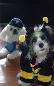 funny dog costumes halloween 12 best pooch parade images on pinterest animals animal