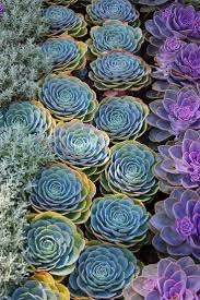 best 25 hens and ideas on pinterest succulents garden