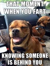 Funny Fart Memes - joke4fun memes dog s farts