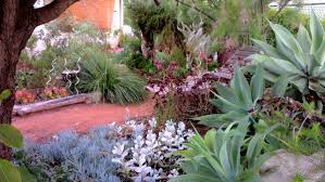 native plants in australia landscape garden design front garden design landscaping ideas