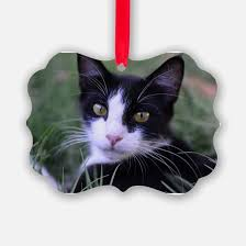 black and white cat ornament cafepress