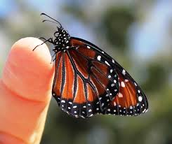 butterfly on finger morning gratitude