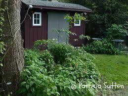 pat sutton u0027s wildlife garden u2013 educator naturalist author