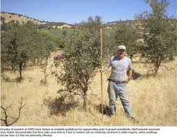 2 meters feet a quarter century of oak woodland research in the sierra foothills