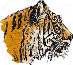 asian tiger drawing stock photos u0026 pictures royalty free asian