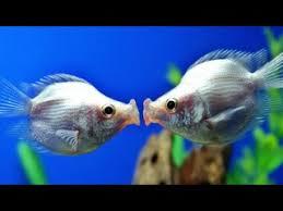 Valentine     s Day Animals In Love Dailymotion