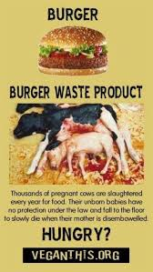 Calves Meme - factory farming cattle burger waste product dead calves end