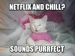Sweet Memes - the weekly mandatory meme contest winners cat match fever
