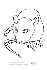coloring page of a rat rat 52 animals printable coloring pages