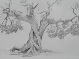 pencil drawings of trees mmartstudios