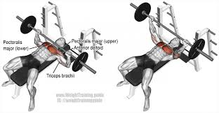 Dumbbell Bench Press Form Bench Barbell Bench Pres The Bench Press Workout Routine To