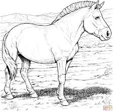 horses coloring pages realistic horse coloring pages itgod