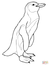 african penguin coloring page free printable coloring pages