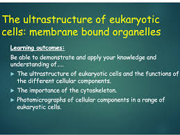 ocr a level biology h020 from 2015 2 1 1 cell structure