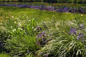 flower garden wikiwand