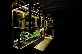 plant in city night jpg