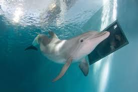 clearwater marine aquarium u2013 pier house 60 marina hotel