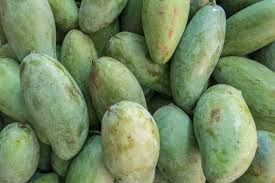 growing and sprouting mango seeds