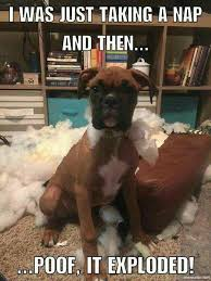 Funny Boxer Dog Memes - pin by letitia staten on boxers pinterest snow dog and animal