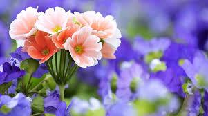 beautiful flowers wallpaper free download al189fq alhuda wallpaper