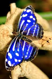 264 best butterflies images on pinterest butterflies beautiful