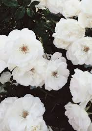 white flower best 25 white flowers ideas on wedding flower guide