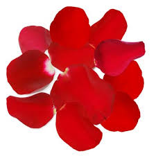 Rose Petals Fresh Rose Petals Red Pink Pink White Orange Rose Petal