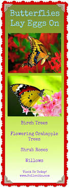 83 best beautiful butterfly gardens images on