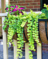 Plants And Planters by The Best Plants For Hanging Baskets On Front Porches