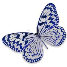 chrysalis capital management blue and white butterfly chrysalis