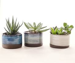 Design Flower Pots Top 25 Best Ceramic Flower Pots Ideas On Pinterest Mother