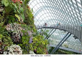 plants in tropical rainforest singapore stock photos u0026 plants in