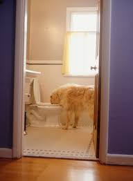 how to fix bubbling u0026 gurgling in a toilet home guides sf gate