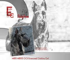 westminster bluetick coonhound 2016 westminster kennel club hound best of breed list u2013 monday