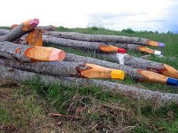 artist turns fallen aspen trees into colored pencil sculptures