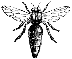 bee drawing cliparts co