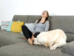 Leather Sofa And Dogs Best Sofa For Dogs Best Sofa For Dogs Or In Sofa Dogs Sofa