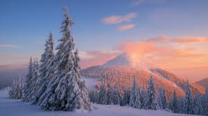 wallpaper carpathian mountains snow winter sunset pine trees