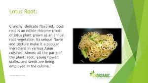 Lotus Flower Parts - health benefits of lotus root youtube