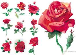 style flower rose flower images free stock photos download 12 031 free stock
