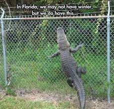 Florida Winter Meme - welcome to florida where we don t use blinkers and the gators can